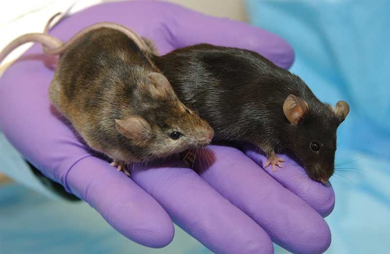 Diabetes cured. Pete and Larry are now determined to lower their cholesterol levels.
