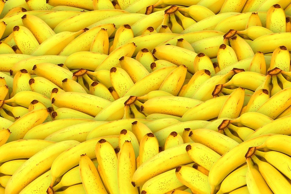 These delicious bananas could help save the world if banana fibre jeans prove popular.