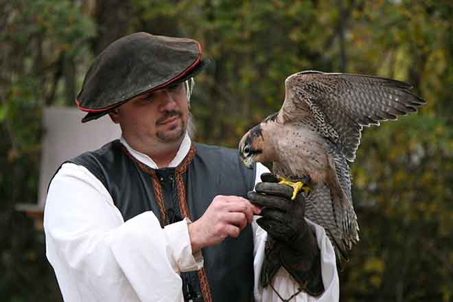The arrival of the Robird drone could spell the end for falconers, falcons, falconer outfitters and people who make large padded leather gloves. (Photo: Wikimedia)
