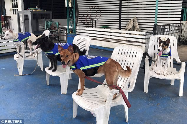 I'm Chase, no I'm Chase! Thai pooches test out a prototype smart vest. (Photo: Reuters)