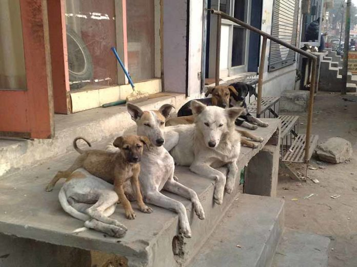 Stray dogs in Thailand could get the chance to protect local communities by being fitted with smart vests. (Photo: Wikimedia/Ravi Gill)
