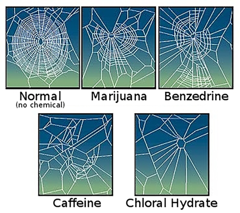 The effect of drugs on spider web construction, 1995. (Photo: Wikimedia Commons/NASA)