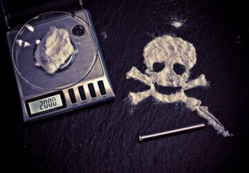Cocaine Bear of Kentucky: When Animals Go Wild
