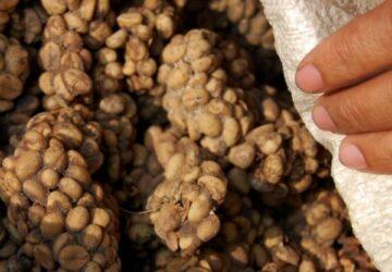 Cat Poop Coffee: The Dark Side of the Luxury Beverage