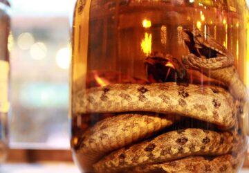 Habu Sake: The Cruelly Produced Snake Wine
