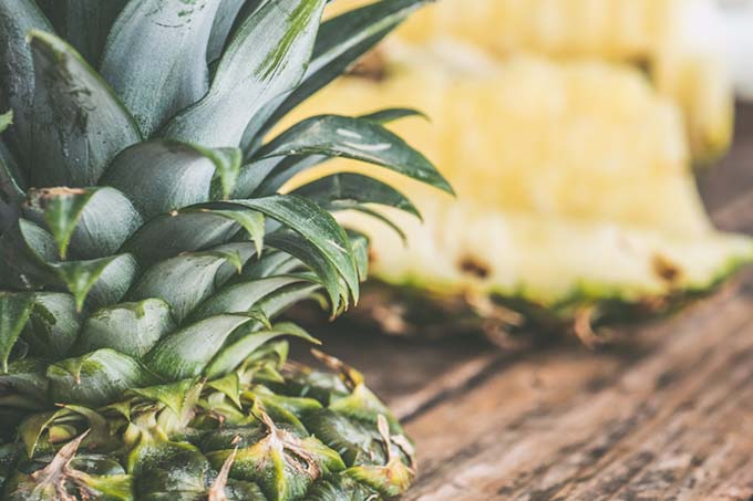 Sorosis definition: A fleshy fruit formed by the consolidation of many flowers with their receptacles, ovaries, etc, as the breadfruit, mulberry, and pineapple. (Photo: stocksnap.io)