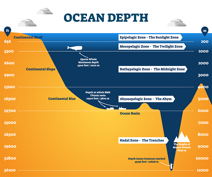 Ocean depth layers showing the mesopelagic and bathypelagic zones where the black swallower resides. (Image: Shutterstock)