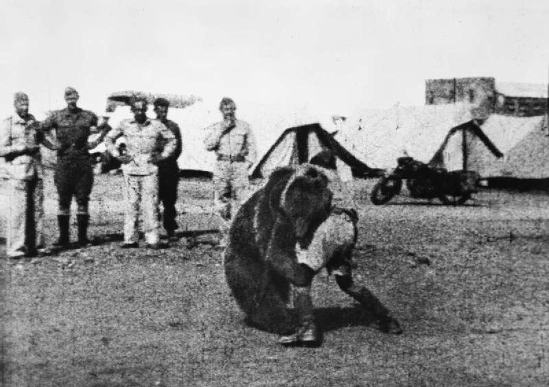 Troops of the Polish 22 Transport Artillery Company (Army Service Corps, 2nd Polish Corps) watch as one of their comrades play wrestles with Wojtek (Voytek) their mascot bear during their service in the Middle East. (Photo: Wikimedia)